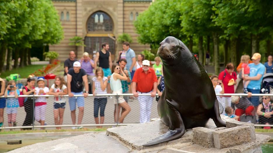 https://forrofestival.com/wp-content/uploads/2016/04/Zoológico-de-Wilhelma-Stuttgart2.jpg